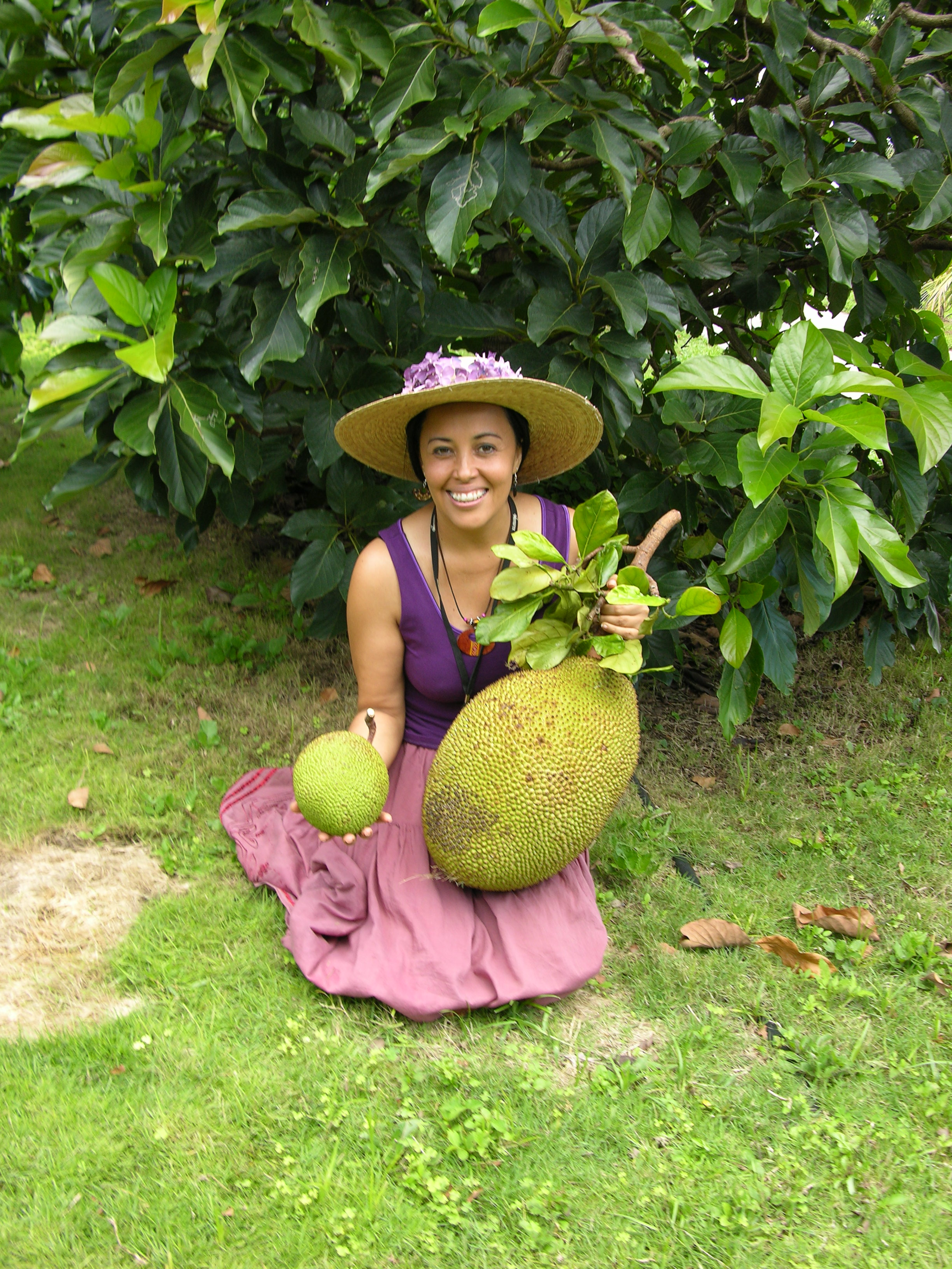 Dr. Noris Ledesma creating a smaller jackfruit