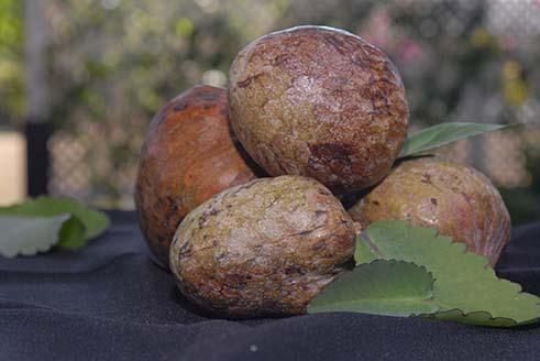 custard-appleb